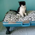 Превью чемодан-кошкина кровать (600x600, 109Kb)