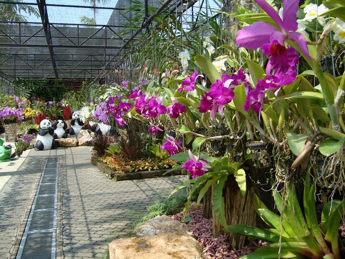 Парк Нонг Нуч (Nong Nooch Tropical Garden) 35663