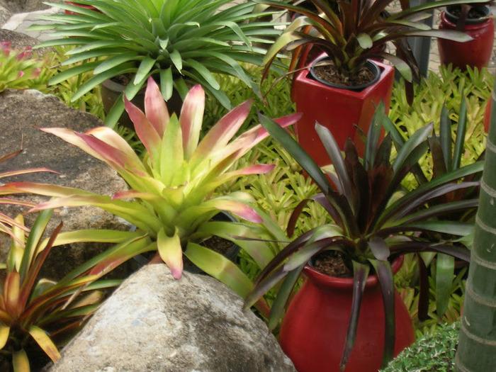 Парк Нонг Нуч (Nong Nooch Tropical Garden) 97589