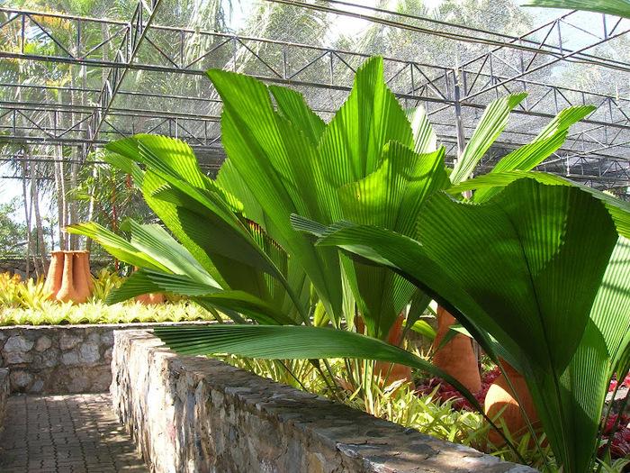 Парк Нонг Нуч (Nong Nooch Tropical Garden) 90498