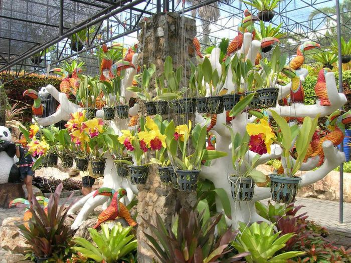Парк Нонг Нуч (Nong Nooch Tropical Garden) 66889