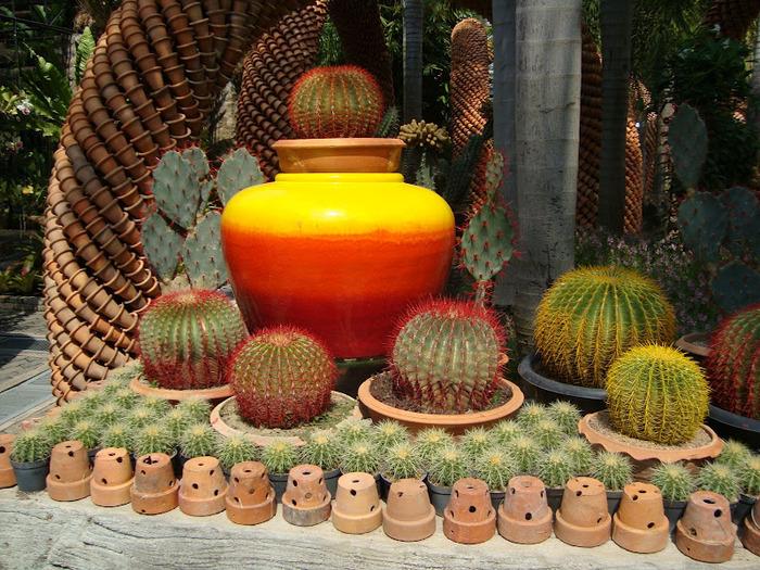 Парк Нонг Нуч (Nong Nooch Tropical Garden) 52222