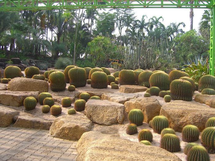 Парк Нонг Нуч (Nong Nooch Tropical Garden) 23581