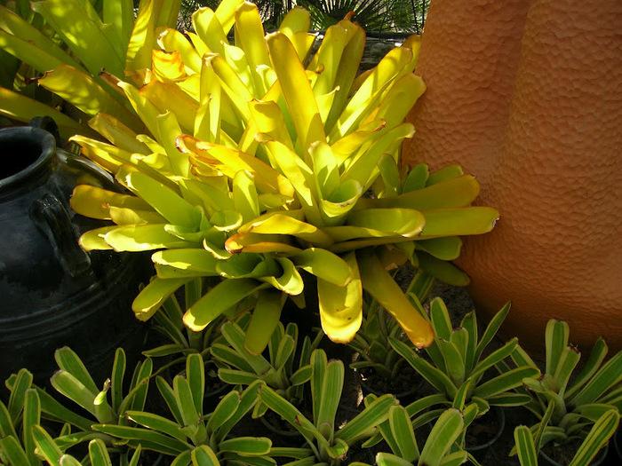 Парк Нонг Нуч (Nong Nooch Tropical Garden) 14148