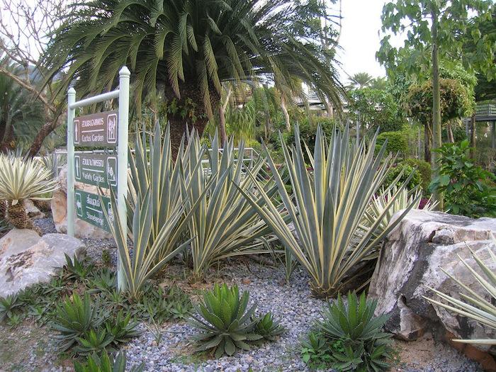 Парк Нонг Нуч (Nong Nooch Tropical Garden) 41326