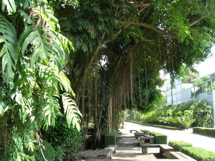 Парк Нонг Нуч (Nong Nooch Tropical Garden) 17437