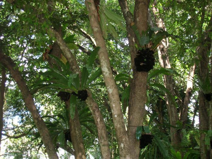 Парк Нонг Нуч (Nong Nooch Tropical Garden) 29014