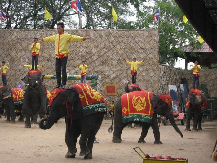 Парк Нонг Нуч (Nong Nooch Tropical Garden) 60923