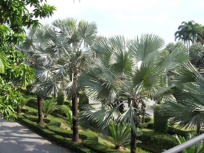 Парк Нонг Нуч (Nong Nooch Tropical Garden) 45770