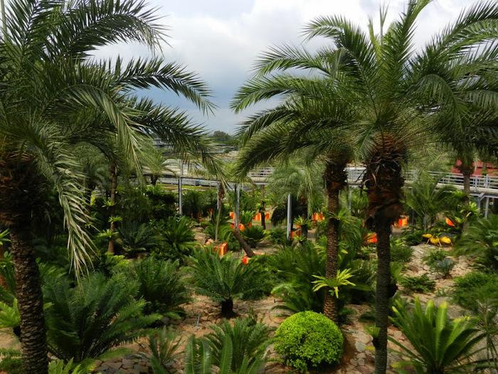 Парк Нонг Нуч (Nong Nooch Tropical Garden) 42681