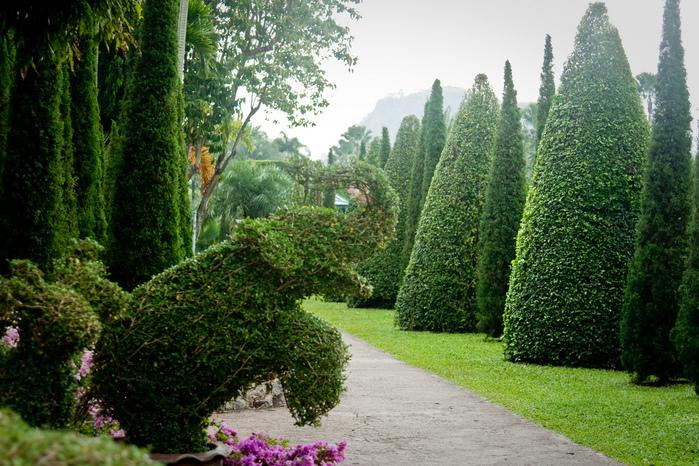 Парк Нонг Нуч (Nong Nooch Tropical Garden) 46550