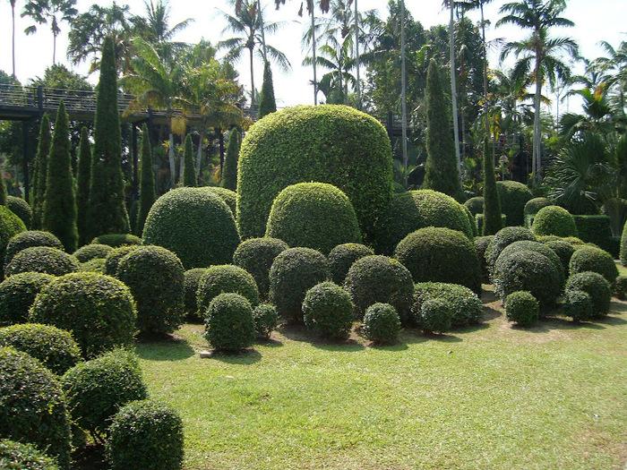 Парк Нонг Нуч (Nong Nooch Tropical Garden) 91196