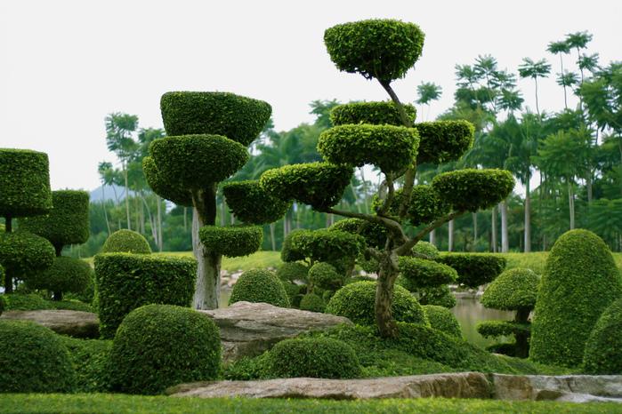 Парк Нонг Нуч (Nong Nooch Tropical Garden) 80158