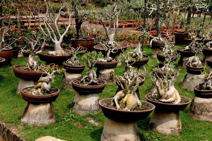 Парк Нонг Нуч (Nong Nooch Tropical Garden) 71403