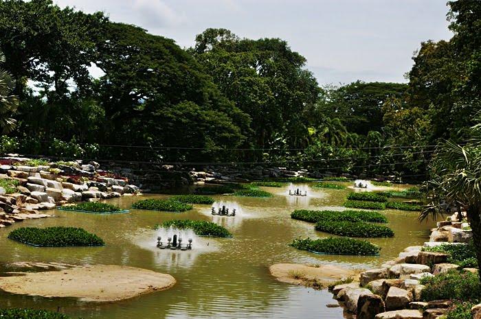 Парк Нонг Нуч (Nong Nooch Tropical Garden) 80555