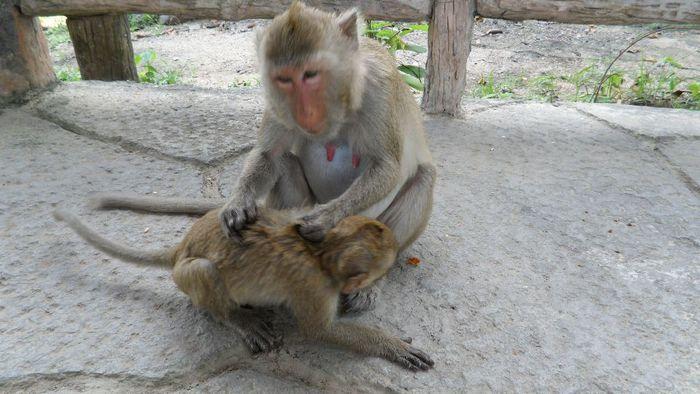 Парк Нонг Нуч (Nong Nooch Tropical Garden) 49399