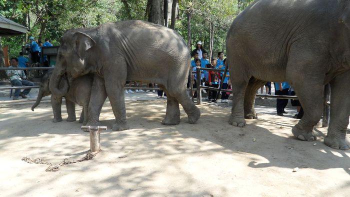 Парк Нонг Нуч (Nong Nooch Tropical Garden) 88038