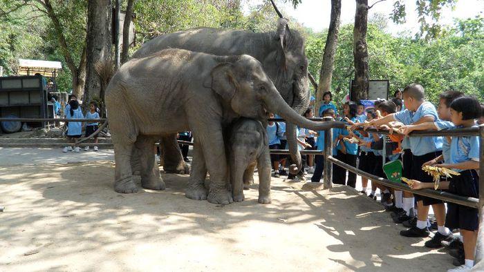 Парк Нонг Нуч (Nong Nooch Tropical Garden) 80076