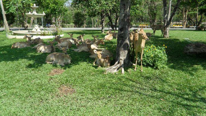 Парк Нонг Нуч (Nong Nooch Tropical Garden) 93793