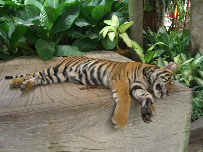 Парк Нонг Нуч (Nong Nooch Tropical Garden) 10869