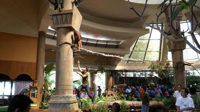 Парк Нонг Нуч (Nong Nooch Tropical Garden) 38710