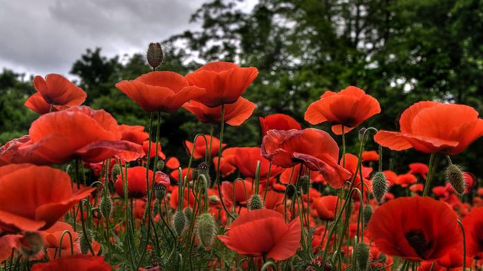 Картинки цветы 1366х768 1