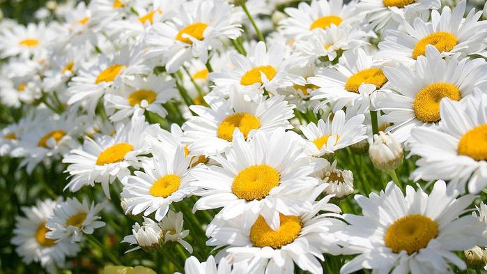 Очень Красивые Цветы На Рабочий Стол