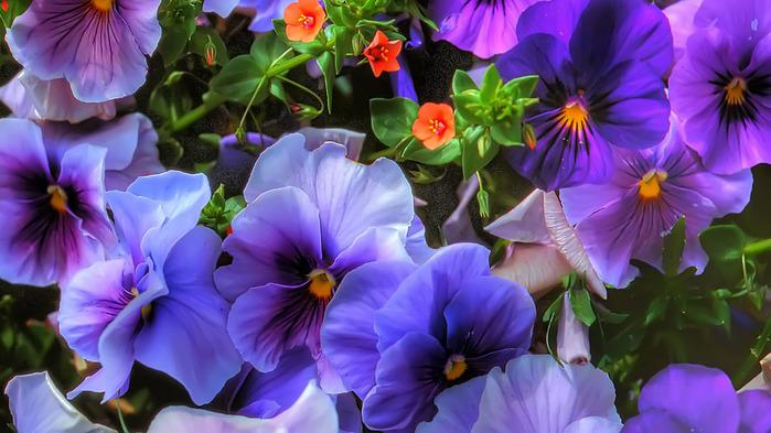 Картинки цветы 1366х768 2