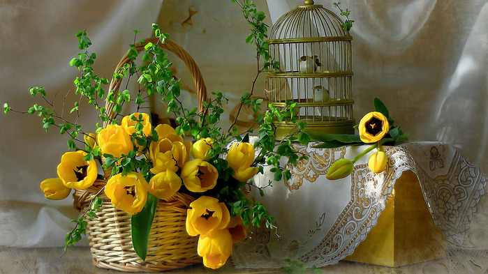 yellow-tulips-wallpaper-1366x768 (700x393, 144Kb)