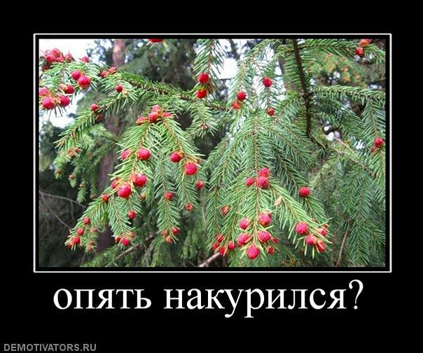 805234_opyat-nakurilsya (604x504, 70Kb)