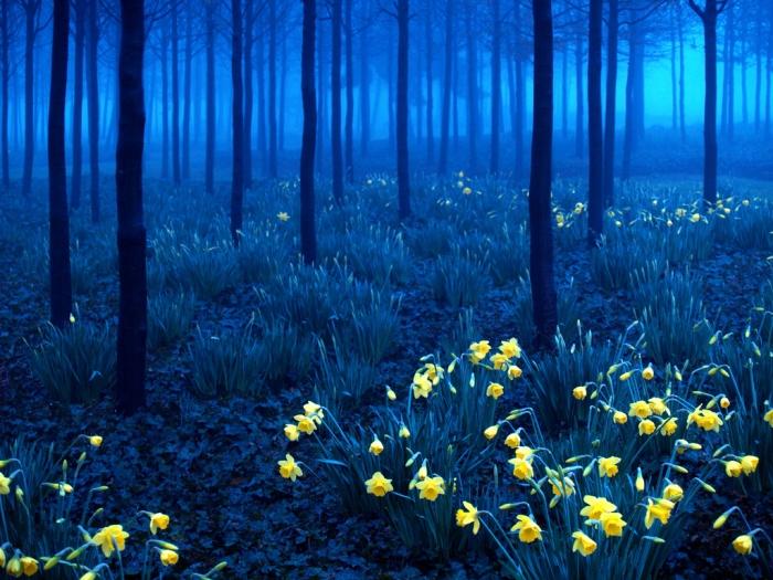 Красивый пейзаж 24 (700x525, 363Kb)