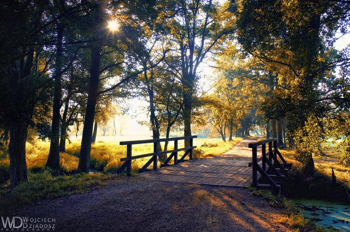 Красивый пейзаж 50 (700x464, 176Kb)