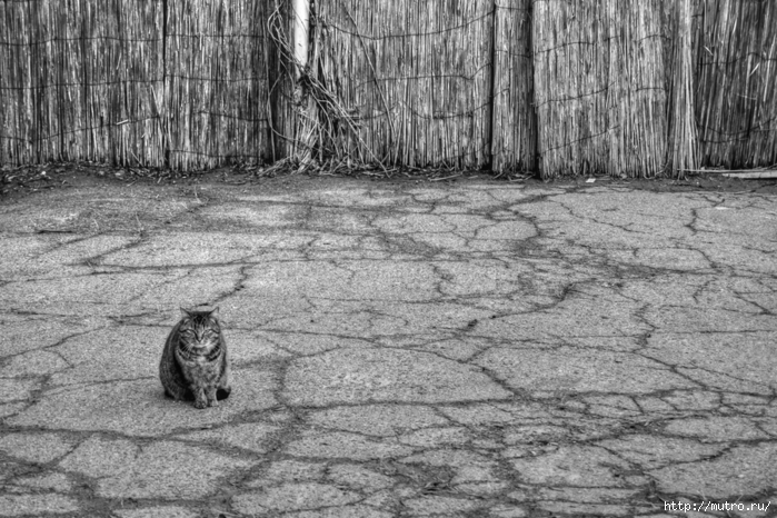 кошка на асфальте
