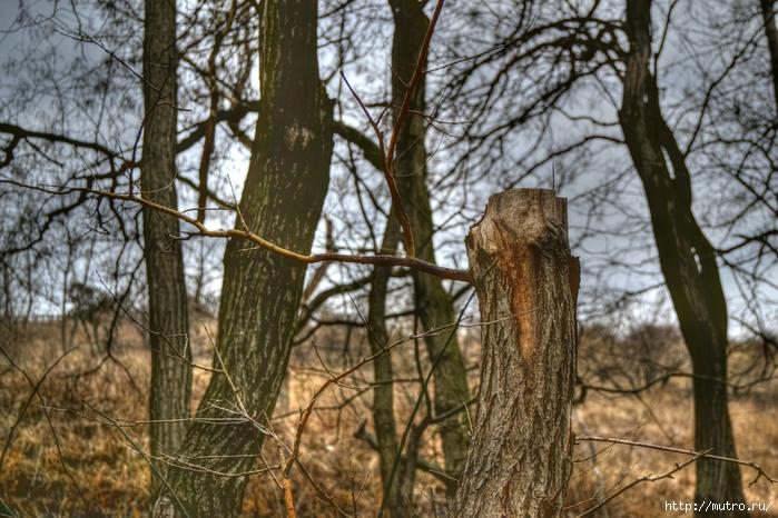 лес, пень