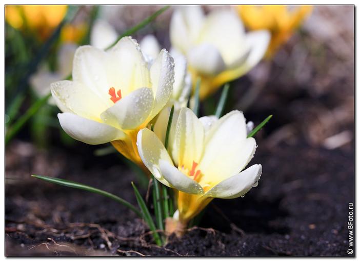 Цветы на даче многолетние фото