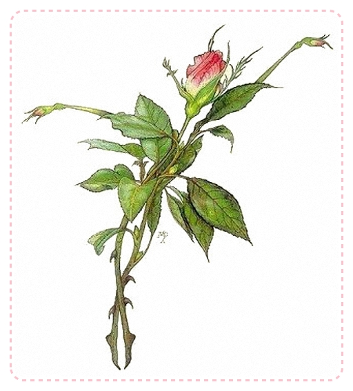 4195696_dancing_rose_1_ (512x567, 183Kb)