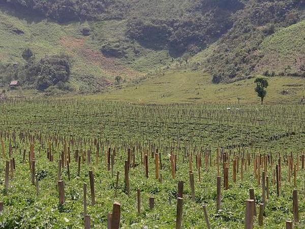 Гватемала - прекрасная страна великих Майя 15 (600x450, 127Kb)