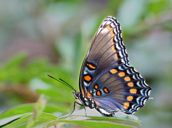Фото животных фотографии Насекомые картинки животный мир