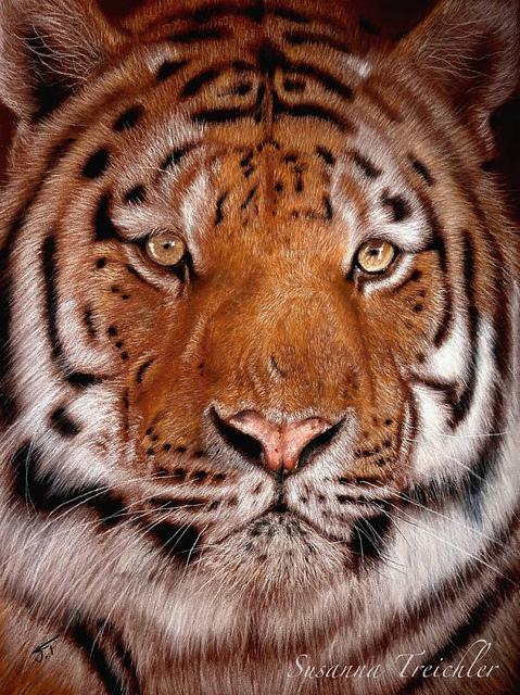 tiger (479x640, 249Kb)