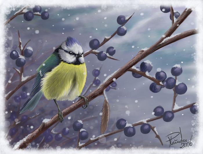 First_snow___blue_tit__by_Emberiza (700x533, 111Kb)