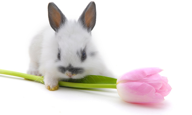 4278666_rabbitfactsphotos06 (640x386, 41Kb)