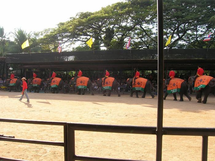 Парк Нонг Нуч (Nong Nooch Tropical Garden) 27004