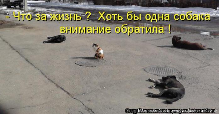 Следствие по делу о митингах под Верховным Советом Крыма идет однобоко. Судят крымских татар, а пророссийские активисты проходят как пострадавшие, - Меджлис - Цензор.НЕТ 9246