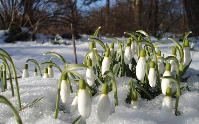 Картинка весна 2013 1