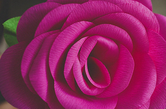 diy-giant-paper-rose-17 (650x430, 67Kb)