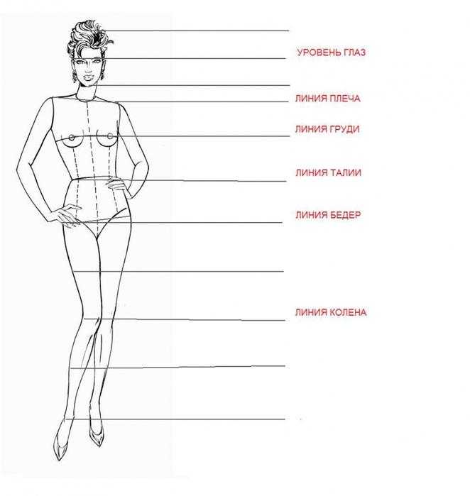 Типовая фигура в пропорции