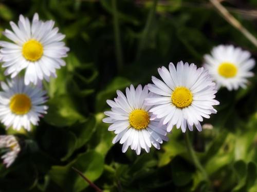 То, чем всегда богата весна!