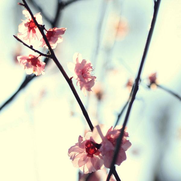 84443887_My_spring__by_incredi (600x600, 55Kb)