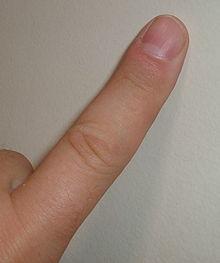 220px-Finger.agr (220x263, 6Kb)