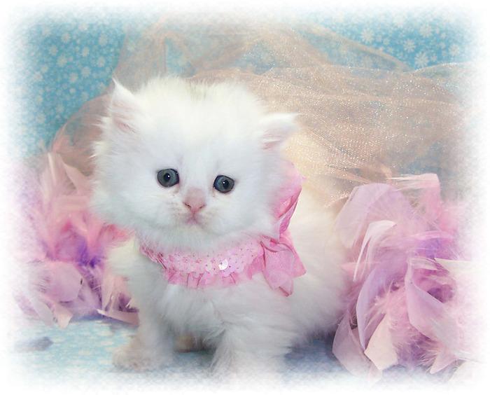 -Cats-cats-23604511-1316-1061 (700x564, 110Kb)